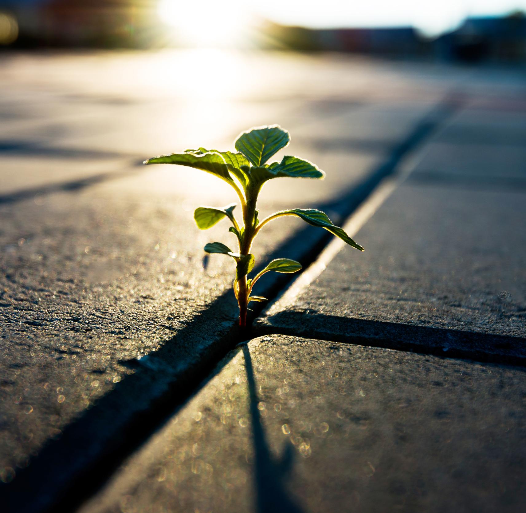 Growth Through Trauma